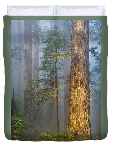 Redwoods In The Blue Mist Duvet Cover
