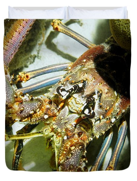 Duvet Cover featuring the photograph Reef Lobster Close Up Spotlight by Amy McDaniel