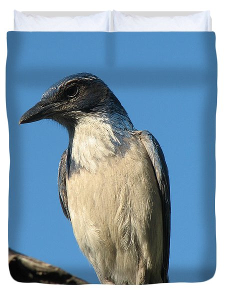 Regal Western Scrub Jay Duvet Cover