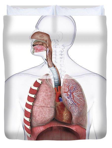 Respiratory System, Illustration Duvet Cover