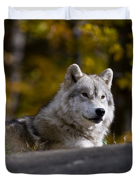 Duvet Cover featuring the photograph Resting Arctic Wolf On Rocks by Wolves Only