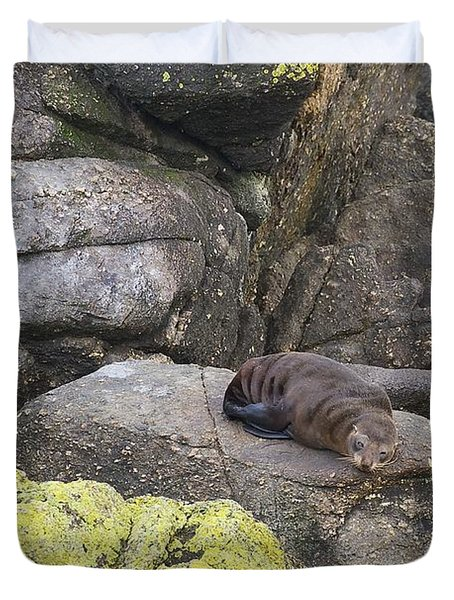 Duvet Cover featuring the photograph Resting Seal by Stuart Litoff