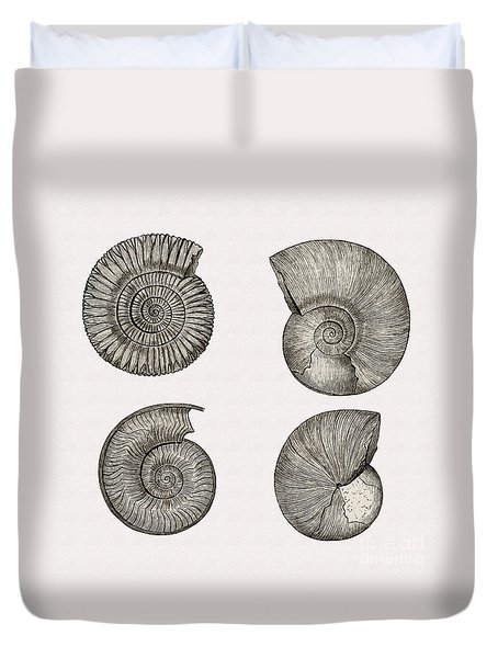 Restored 1893 Ammonite Illustration Duvet Cover