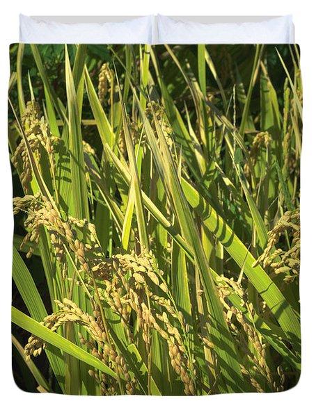 Rice Duvet Cover