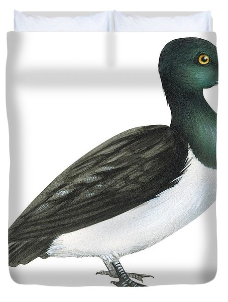 Ring-necked Duck  Duvet Cover by Anonymous