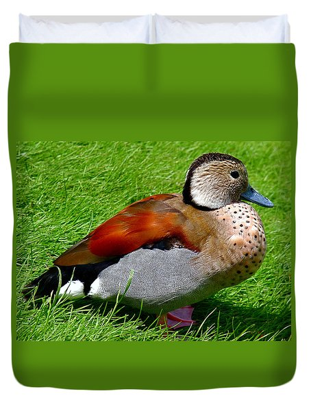 Ringed Teal Drake Duvet Cover