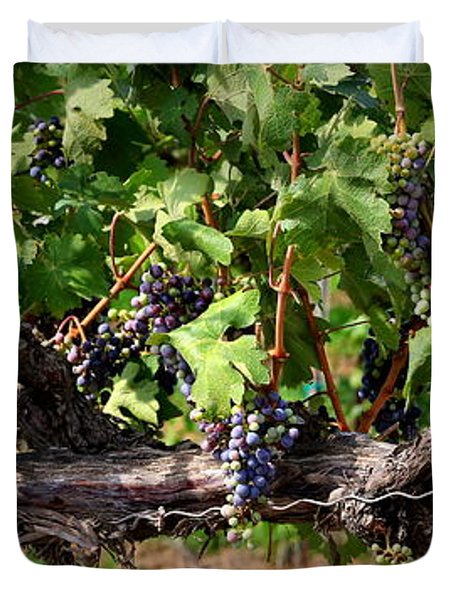 Ripening Grapes Duvet Cover by Carol Groenen
