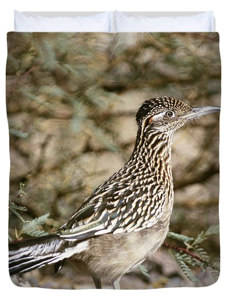 Roadrunner Geococcyx Californianus Duvet Cover