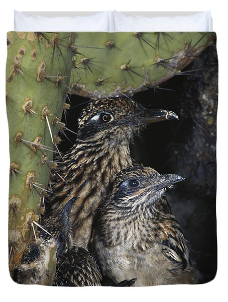 Roadrunners In Nest Duvet Cover
