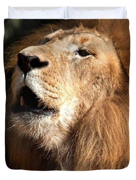 Duvet Cover featuring the photograph Roar - African Lion by Meg Rousher