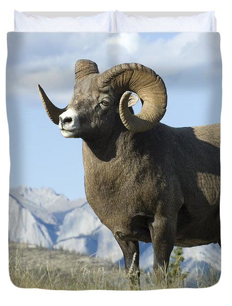 Rocky Mountain Big Horn Sheep Duvet Cover