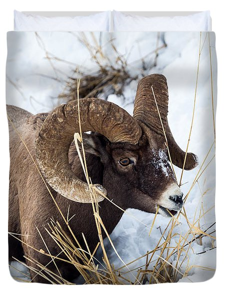 Rocky Mountain Bighorn Sheep Duvet Cover