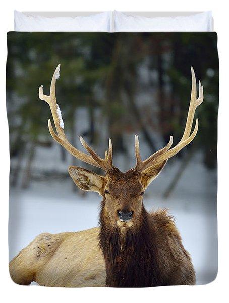 Rocky Mountain Elk Duvet Cover