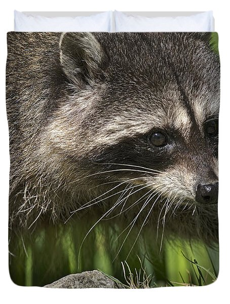 Rocky Raccoon Duvet Cover by Sharon Talson