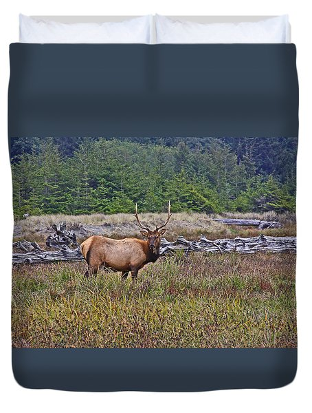 Roosevelt Elk Duvet Cover by Mark Alder