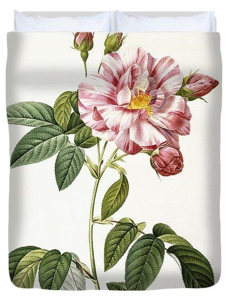 Rosa Gallica Versicolor Duvet Cover by Pierre Joseph Redoute