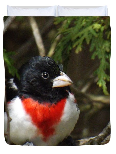Rose Breasted Grosbeak Perched Duvet Cover by Brenda Brown