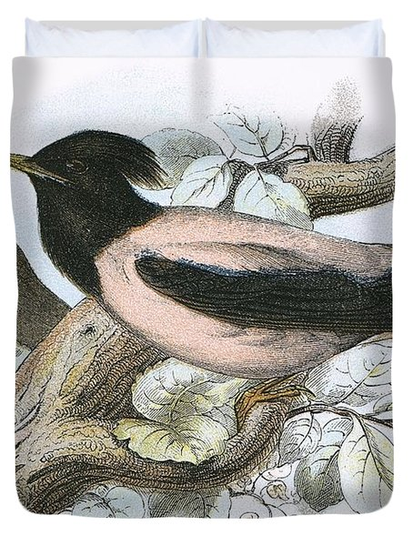 Rose Coloured Starling Duvet Cover by English School