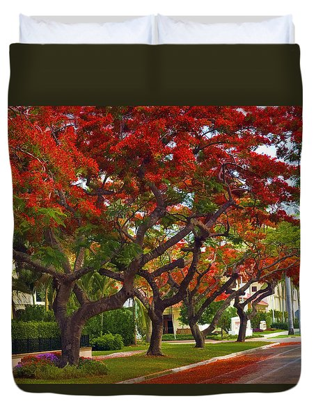 Royal Poinciana Trees In Blooming In South Florida Duvet Cover