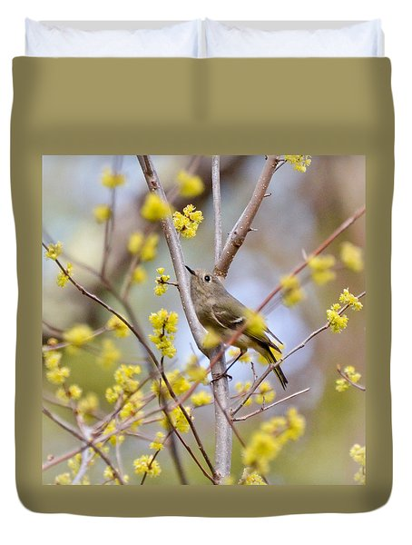 Ruby-crowned Kinglet Duvet Cover by Kerri Farley