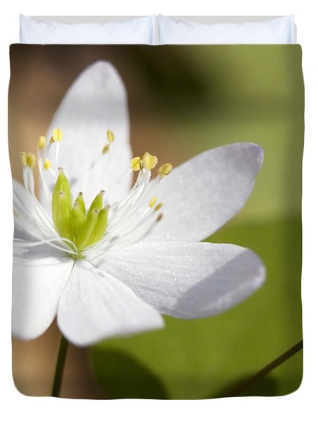 Rue Anemone Duvet Cover by Melinda Fawver