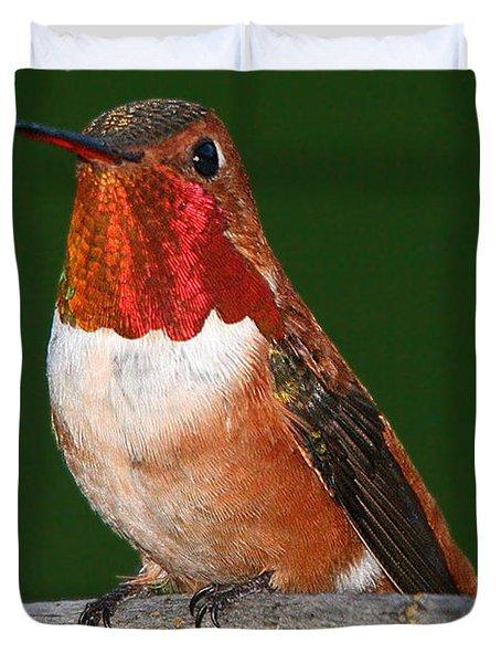 Rufous Hummingbird Duvet Cover