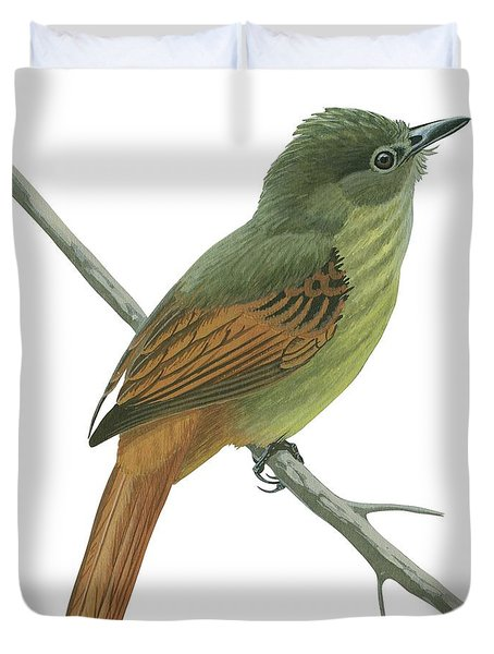 Rufous Tailed Flatbill  Duvet Cover by Anonymous