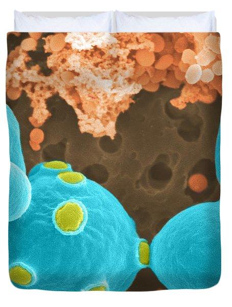 Saccharomyces Cerevisiae Sem Duvet Cover by Scimat
