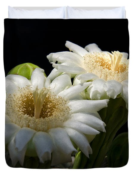 Saguaro Cactus Flowers  Duvet Cover by Saija  Lehtonen