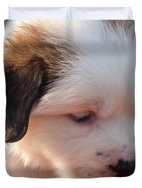 Saint Bernard Puppy Duvet Cover by Mechala  Matthews
