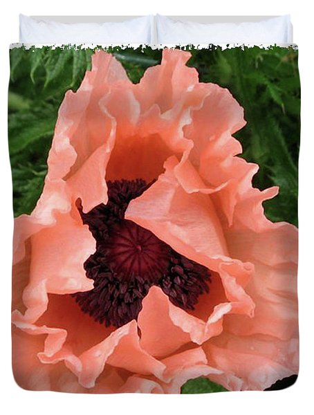 Salmon Colored Poppy Duvet Cover by Barbara Griffin