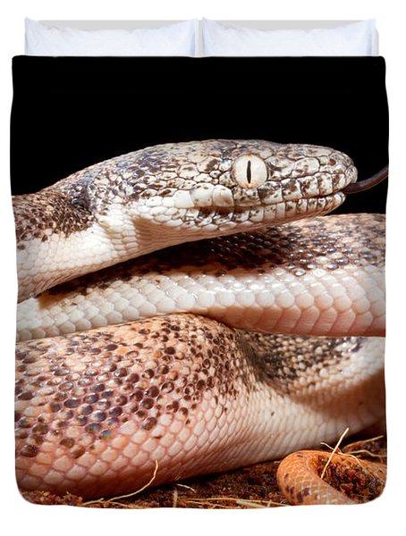 Savu Python In Defensive Posture Duvet Cover