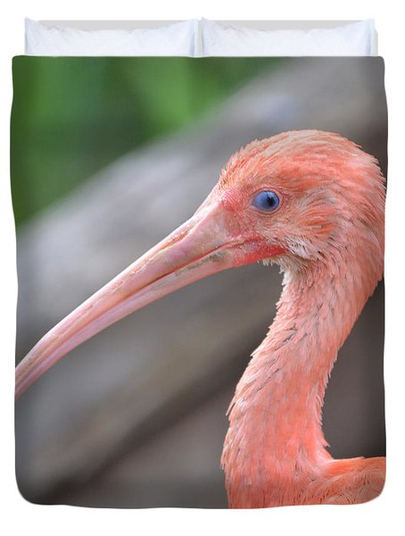 Scarlet Ibis 1 Duvet Cover by Richard Bryce and Family