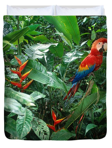 Scarlet Macaw Duvet Cover by Art Wolfe