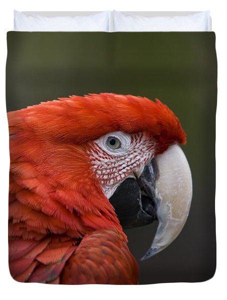 Duvet Cover featuring the photograph Scarlet Macaw by David Millenheft