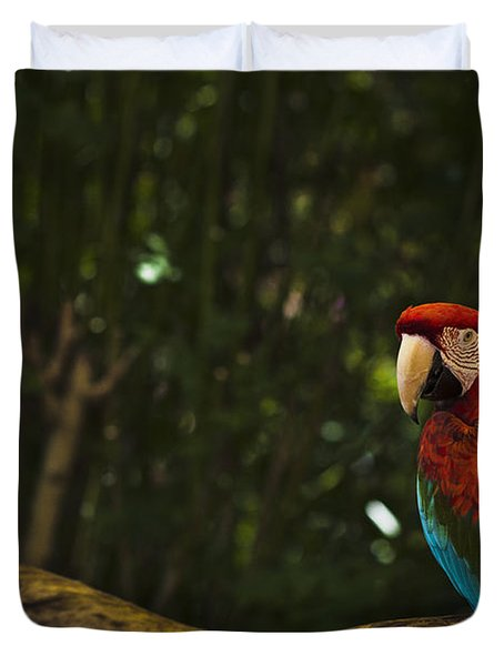 Scarlet Macaw Profile Duvet Cover by Bradley R Youngberg