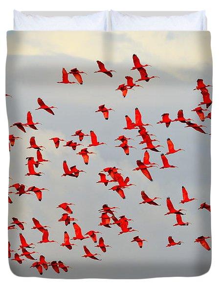 Scarlet Sky Duvet Cover by Tony Beck