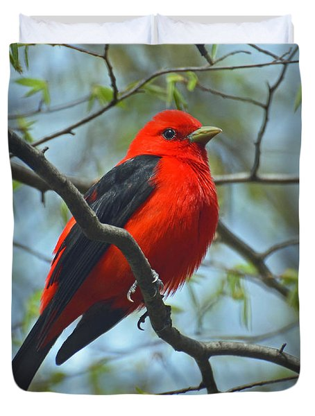 Scarlet Tanager In The Forest Duvet Cover by Rodney Campbell