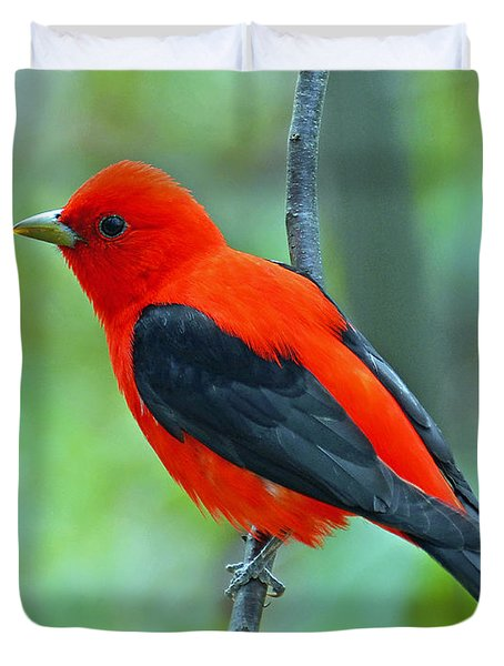 Scarlet Tanager Duvet Cover by Rodney Campbell