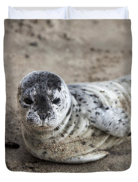 Seal Baby Duvet Cover by David Millenheft