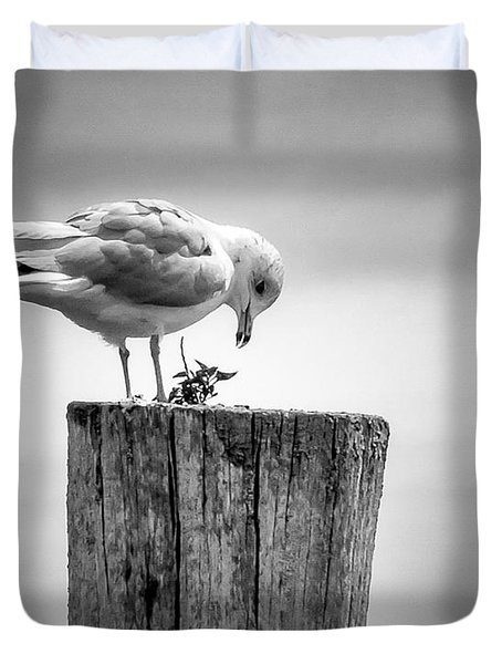 Seagull On Pier  Duvet Cover by Brian Caldwell
