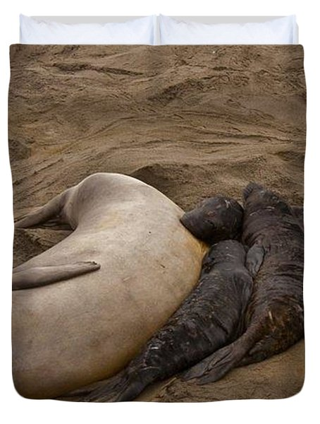 Seal And Pups Duvet Cover