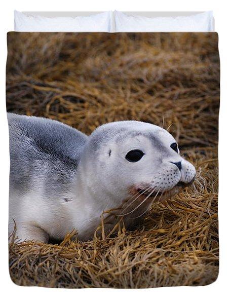Seal Pup Duvet Cover by DejaVu Designs