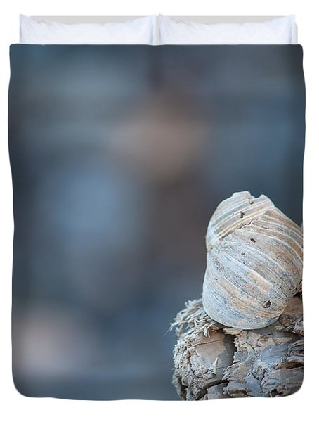 Seashells On Driftwood  Duvet Cover by Brian Boudreau