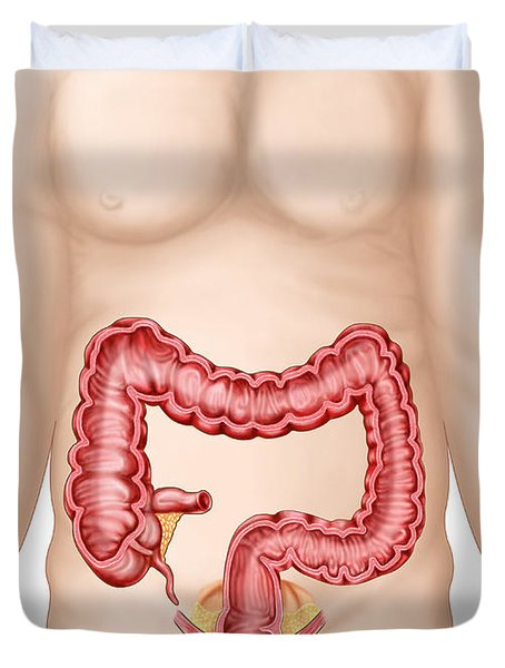 Sectional View Of Large Intestine Duvet Cover by Stocktrek Images