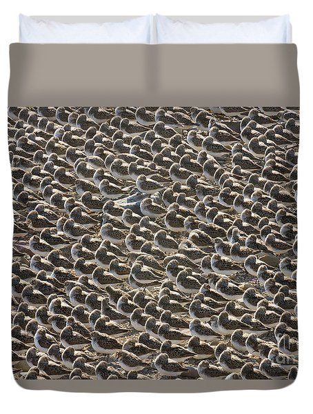 Semipalmated Sandpipers Sleeping Duvet Cover by Yva Momatiuk John Eastcott