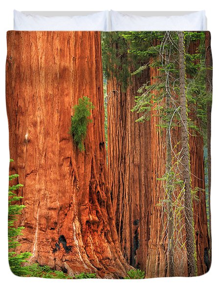 Sequoias Duvet Cover