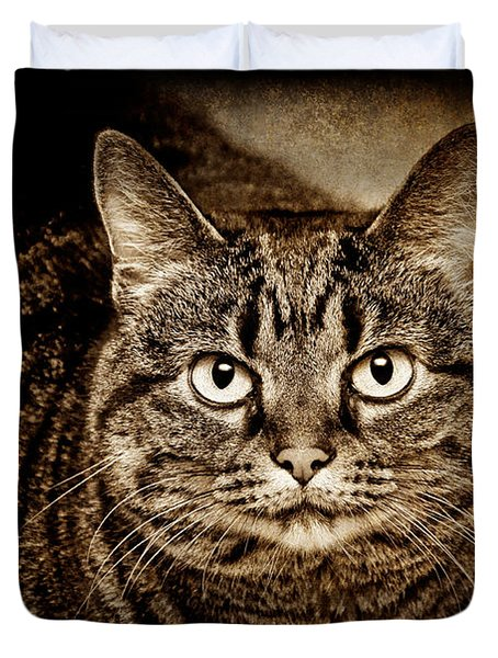 Serious Tabby Cat Duvet Cover by Andee Design