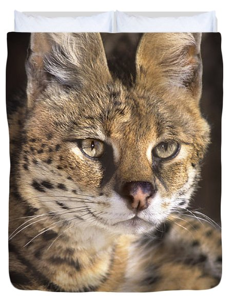 Duvet Cover featuring the photograph Serval Portrait Wildlife Rescue by Dave Welling