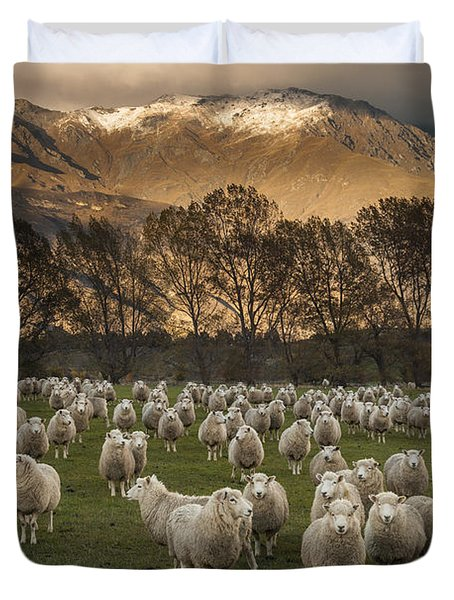 Duvet Cover featuring the photograph Sheep Flock At Dawn Arrowtown Otago New by Colin Monteath, Hedgehog House